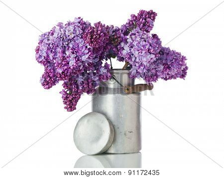 Blooming Lilac branches arranged in vintage milk canister isolated on white background