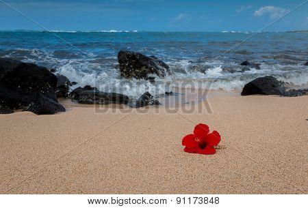 red Hiacynth on a tropical beach