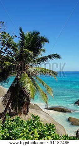 Tropical Coast