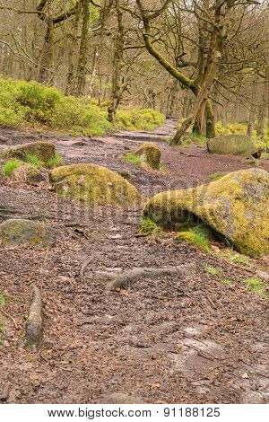 Padley Gorge In The Peak District
