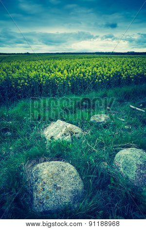 Vintage Photo Of Green Springtime Meadow Landscape