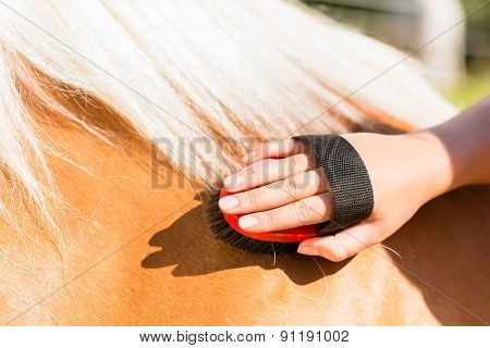Woman combing pony on horse stable