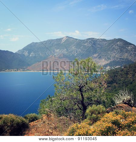 View Of Adrasan Bay. Pine Tree And Sea - Vintage Photo.