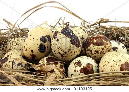 A Large Number Of Eggs