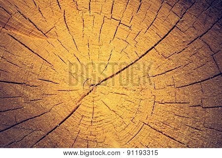 Vintage Photo Of Background Of Sliced Tree Trun