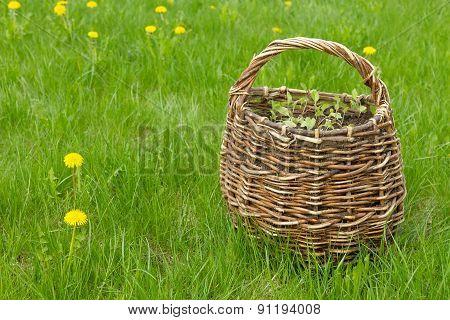 Wicker Basket On The Lawn