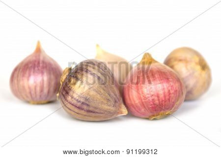 Solo garlic