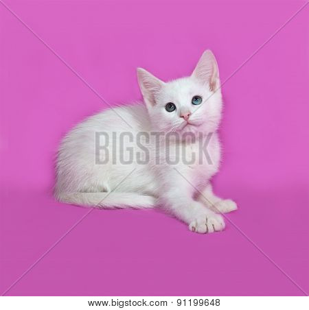 Fluffy White Kitten Lies On Pink