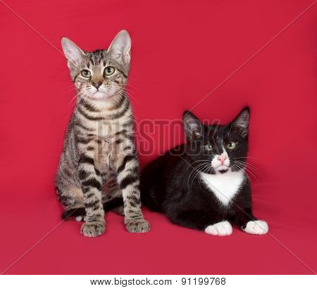 Two Kittens Sitting On Red