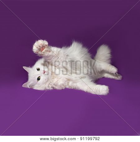 White Cat Lying On Lilac