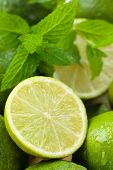 stock photo of lime  - Backgrounds. Close up shot of wet limes and mint. Focus on the central part of sliced lime. ** Note: Shallow depth of field - JPG