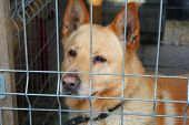 foto of caged  - Dog in the animal shelter standing in the cage - JPG
