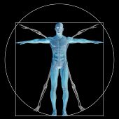 picture of male body anatomy  - Vitruvian human or man as a concept - JPG