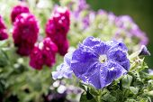 foto of spayed  - bouquet of colorful flowers in vase selective focus on first flower - JPG