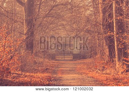 Large Gate In A Misty Forest