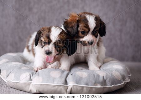 two yawning puppy