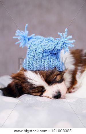 puppy in a blue hat