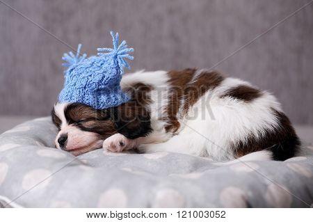 sleeps in a hat
