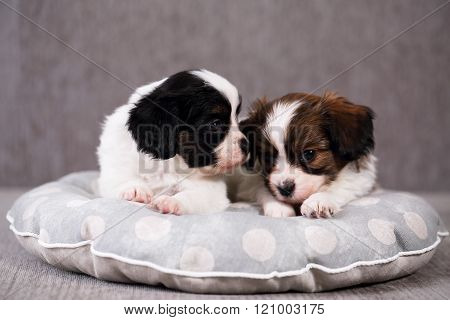 Portrait of two puppies