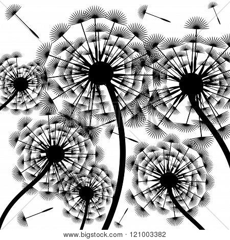 Dandelion silhouette-background