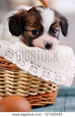 sad puppy in a basket, close-up