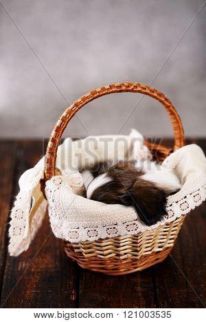 gift sleeps in a basket