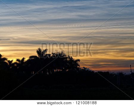 Tropical Palm Trees in Silhouette During Vibrant Sunrise