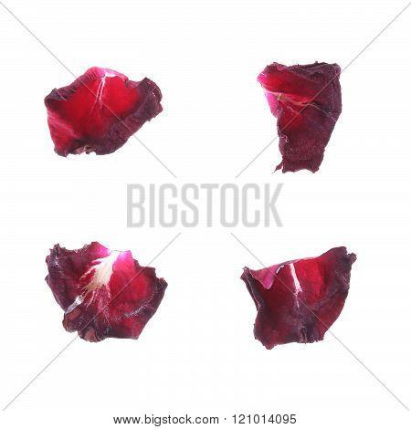 Petal Rose Flower Isolated On White Background