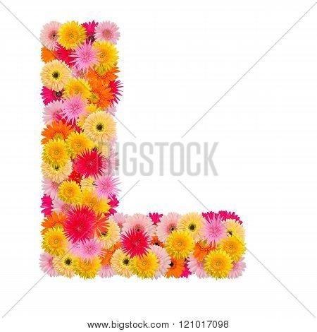 Letter L alphabet with gerbera isolated on white background