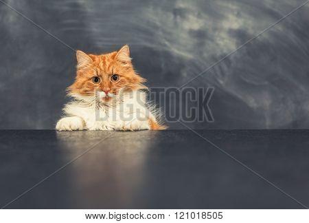 rude cat on black table