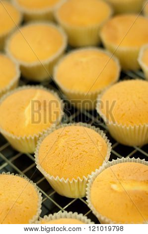 Fresh delicious homemade cupcakes chiffons sponge from oven
