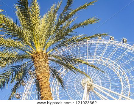 Orlando,Florida/USA-4 Jan 2016: Eye Orlando, Florida, USA,  Wheel and palm tree.