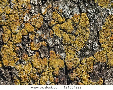 Tree Bark Covered With Moss Close Up