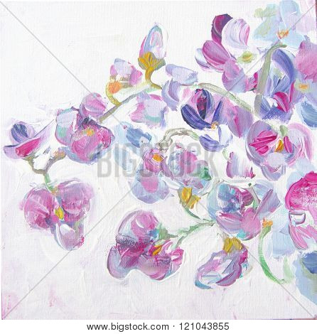 Beautiful spring pink flowers watercolor illustration. Floral background. Sweet pea flowers brunches. Still-life painting.
