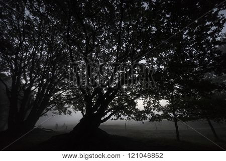 tree at dawn