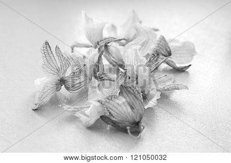 Dead orchid. dried flowers. Black and white photo