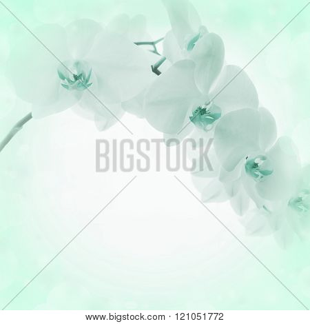 Light Background With Orchid Flowers