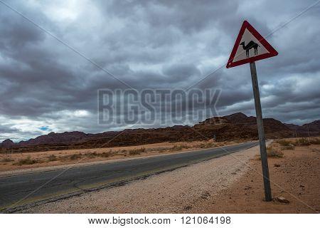 Dromedary crossing