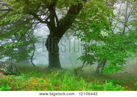 Wood with a fog
