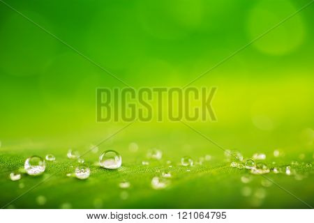 Green leaf and water drops close-up natural green conception