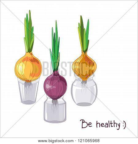 Spring onion set