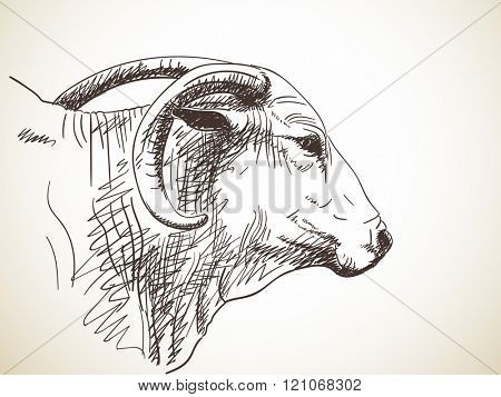Sketch of cow's muzzle with big horns, Hand drawn illustration