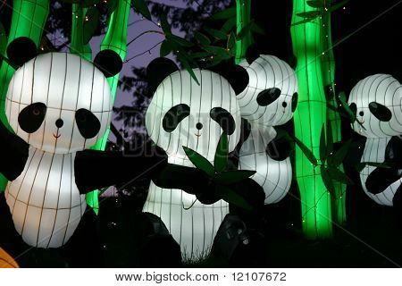 pandas at chinese lantern festival celebrating new years