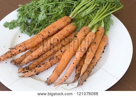 Carrots Recently Pulled From Ground On Plate