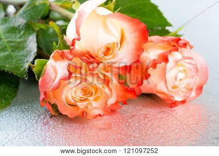 Beautiful Three Orange Rose Flowers On Light Background With Drops, Close Up