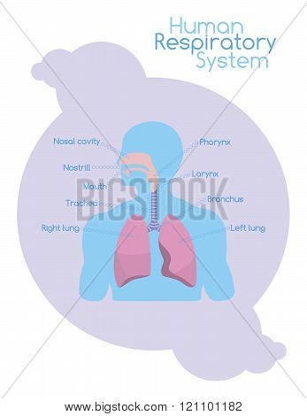 What's Inside Human Respiratory System