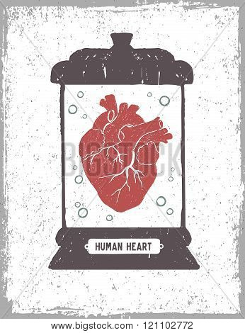 Human Heart In A Medical Jar Vector Illustration.