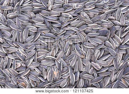 Extreme Close-up Image Of Sunflower Seeds, Background Image