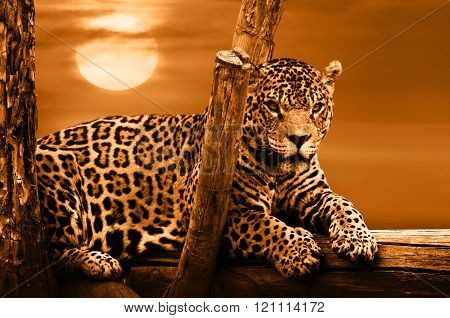 Jaguar Sitting On A Tree, Sunset