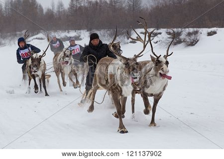 Racing On The Reindeer